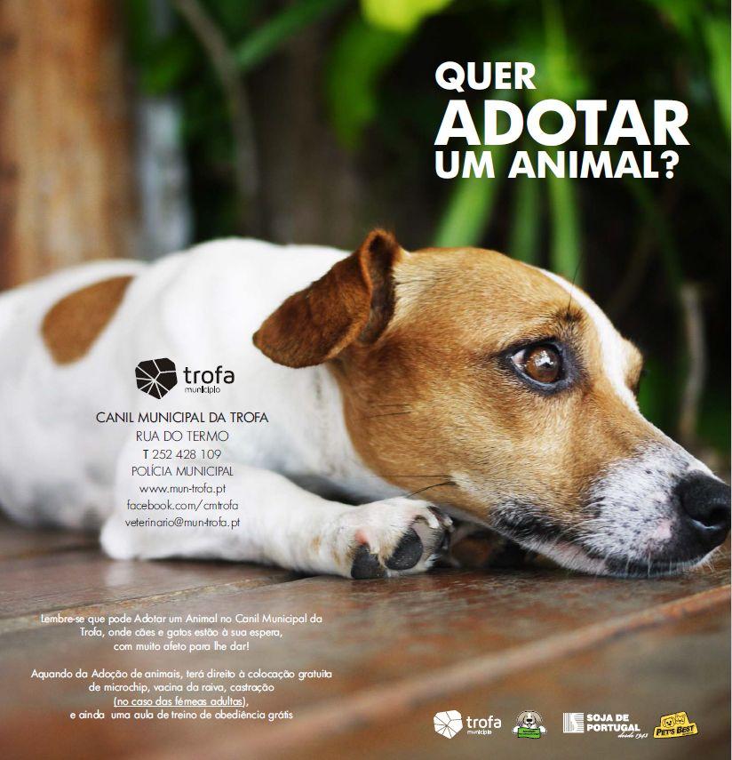 SOJA DE PORTUGAL e SORGAL PET FOOD apoiam campanha de adoção responsável